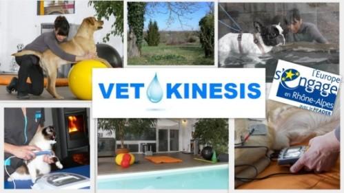 vetokinesis Centre de rééducation fonctionnelle près de Lyon physiothérapie - hydrothérapie pour chiens et chats