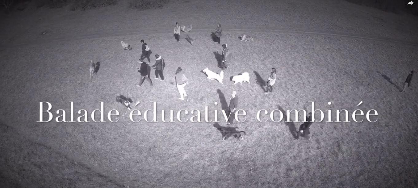 balade canine nature libre éducation collectif agility dijon