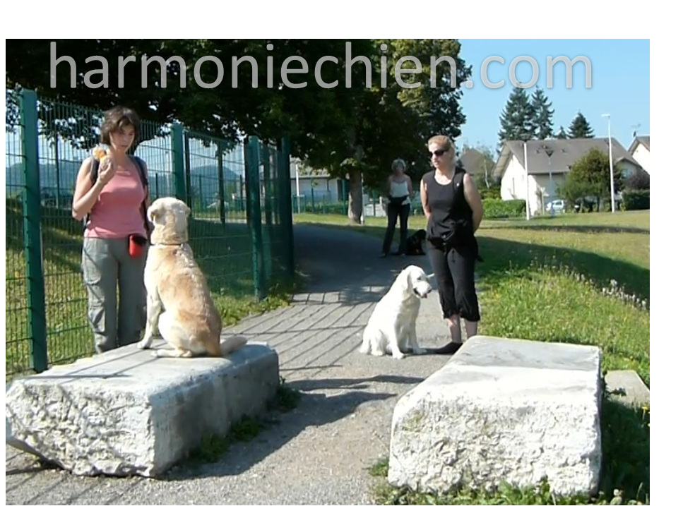 education canine en ville dijon
