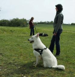 seance individuelle education canine dijon