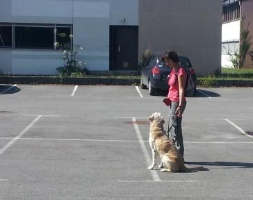 education canine en ville dijon