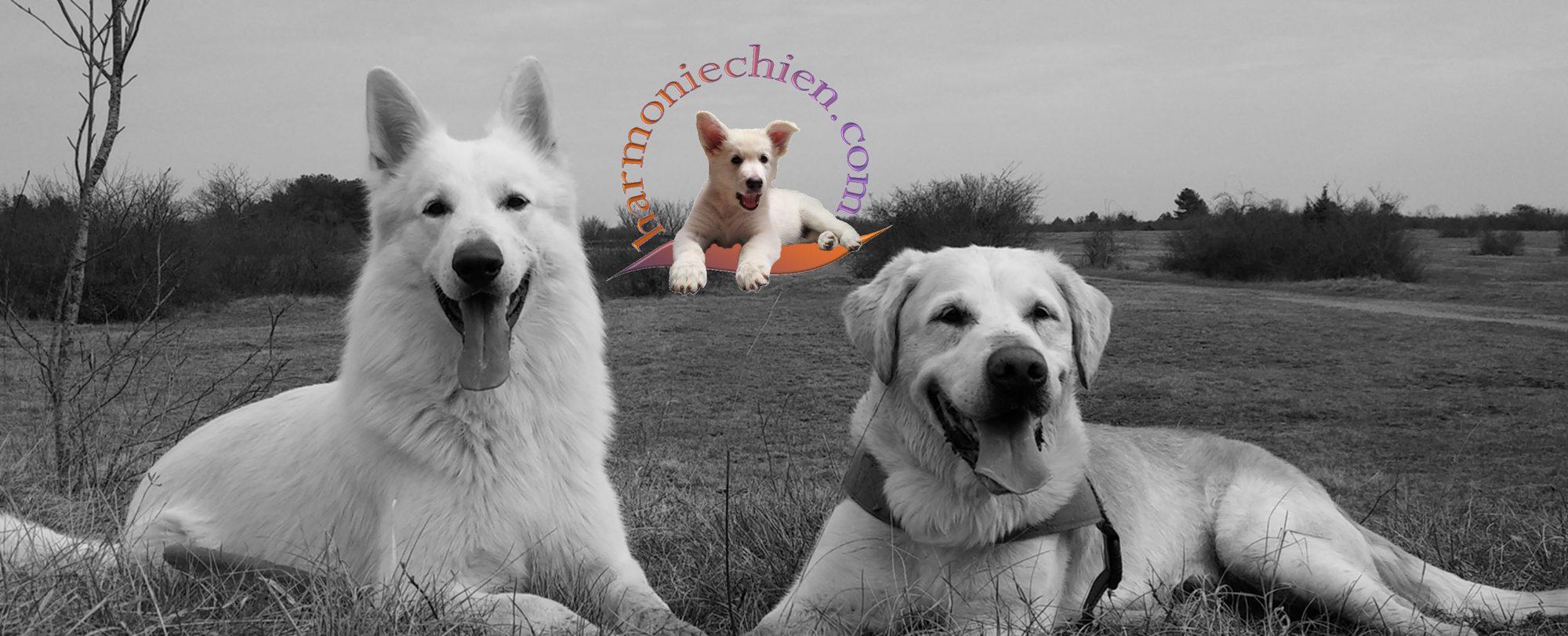 Éducateur comportementaliste canin – 21 Dijon